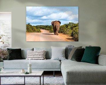 Addo Elephant park Zuid-Afrika van Annette van Dijk-Leek