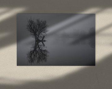 Boom met mist in het water van Dennis Bresser