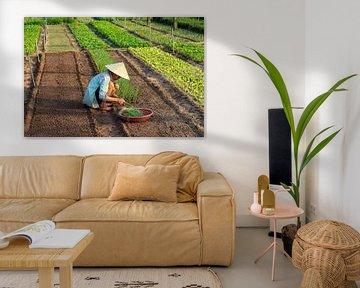 Groente planten in Vietnam van Kevin de Bruin