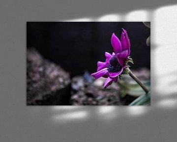 Violette Gefühle von Bernadet van der Werf