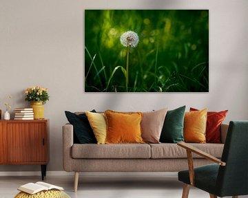 Bright Sunlit Round Common Dandelion van Urban Photo Lab