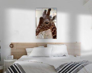 Giraffe van Suzanne Brok