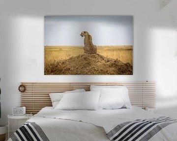 Jaguar in der Savanne von Julian Buijzen