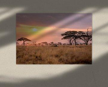 Coucher de soleil dans le Serengeti sur Julian Buijzen