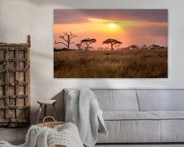 Sonnenuntergang in der Serengeti von Julian Buijzen