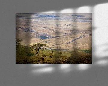 De Serengeti van Julian Buijzen