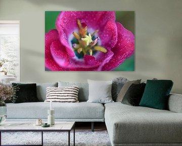 Tulp van boven van Joram Janssen