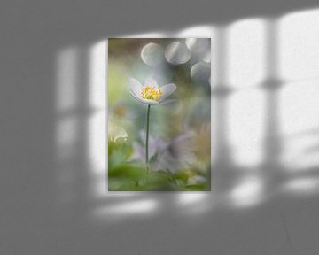 Beautiful solitaire van Luc Toegaert