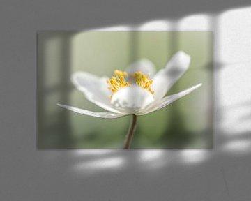 Shine van Luc Toegaert