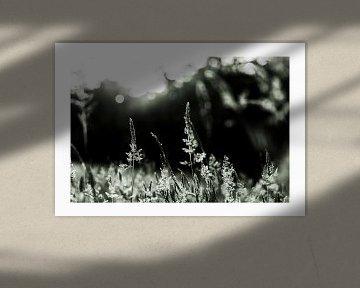 Triptychon 'Gras im Gegenlicht', ausgeführt in der '828-Farbtechnik von Studio de Waay