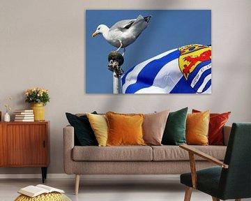 Möwe auf Zeeuwse flag von Alice Berkien-van Mil