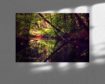 Reflexionen in der Spanderswoud von gooifotograaf