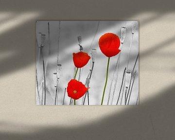 Poppy-Art (Rode Klaprozen Art) van Caroline Lichthart