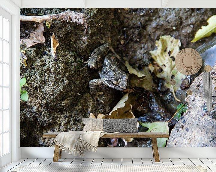 Beispiel fototapete: Brauner Frosch auf der Jagd von Christophe Fruyt