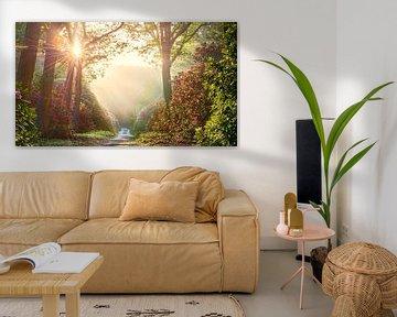 Sommersonne im Wald mit Rhododendren von Jenco van Zalk