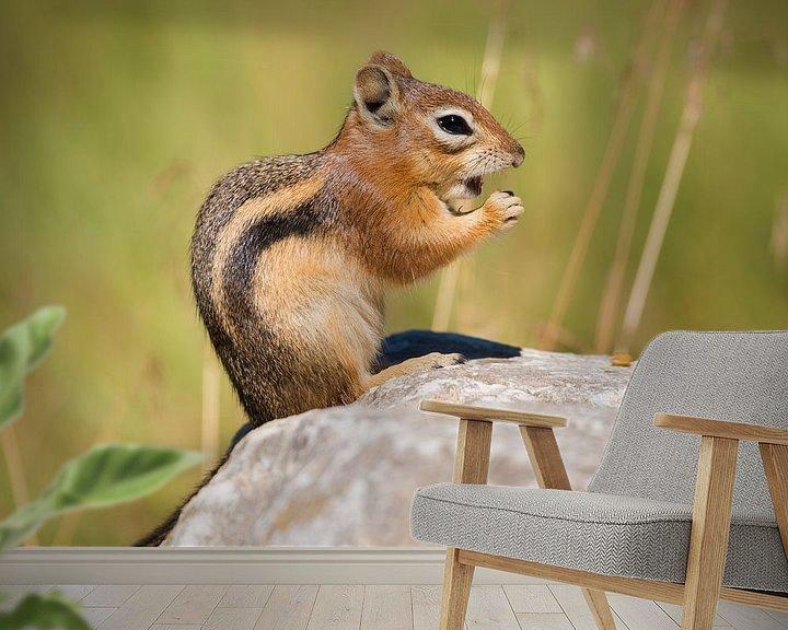 Beispiel fototapete: Streifenhörnchen von Denis Feiner