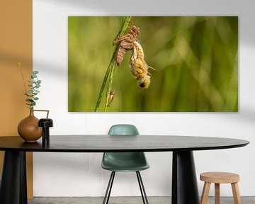 Vierfleck-Libelle von Henk Roosing