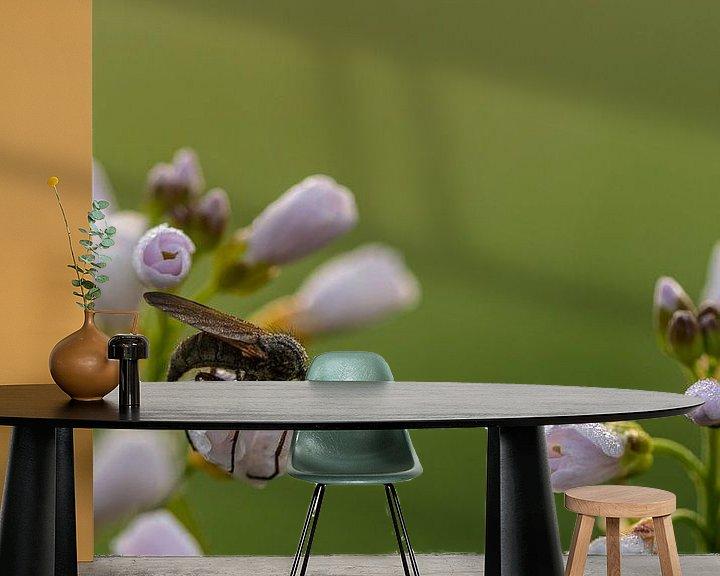 Beispiel fototapete: Kuckucksblume Raubfliege von Henk Roosing