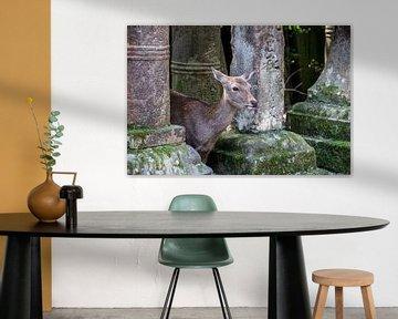 Hirsch zwischen Steinlaternen in Nara von Mickéle Godderis