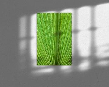 Grünes Palmenblatt Nahaufnahme von Iris Koopmans