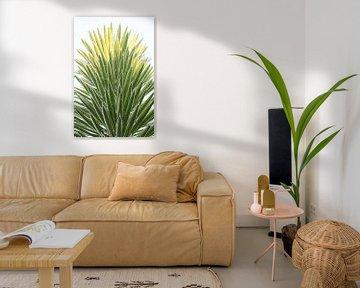 Nahaufnahme einer besonderen Palme von Iris Koopmans