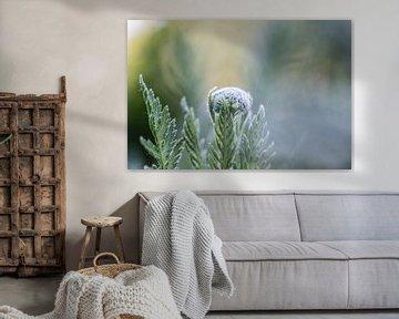 wit en groen van Tania Perneel