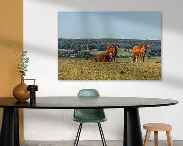 Nieuwsgierige runderen in Zuid-Limburg van John Kreukniet