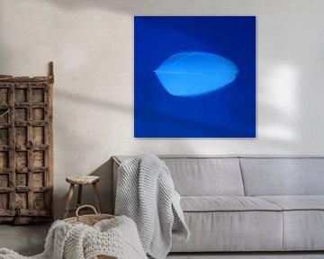 Veertje blauw van Jeannine Van den Boer