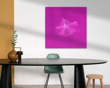 Blume fuchsiafarben von Jeannine Van den Boer