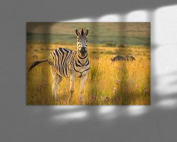 Zebra schaut in die Kamera. von Gunter Nuyts