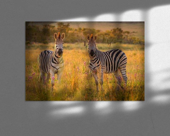 Beispiel: Zebras schauen in die Kamera. von Gunter Nuyts