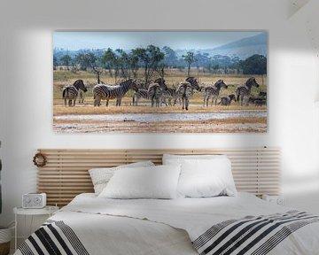 Kudde zebra's van jacky weckx