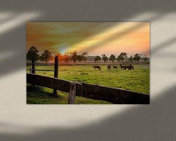 Pferde auf der Wiese bei Sonnenuntergang von Rick van Geel