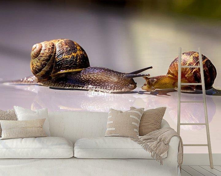 Beispiel fototapete: eine zufällige Begegnung zwischen zwei Schnecken, ist Liebe in ihren Häusern? von Studio de Waay