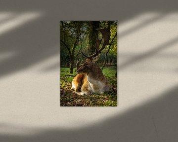 Herten rust van Amber van der Velden