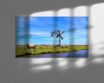Paysage de polder ensoleillé avec ciel bleu, moutons et moulin à vent classique.