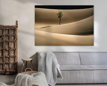 Einsamer Baum in der Wüste Sahara
