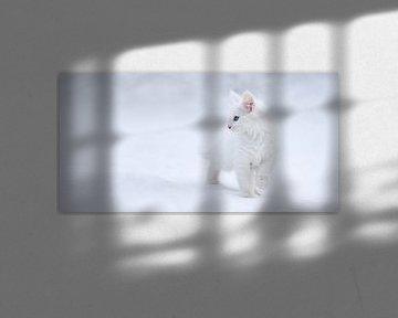 Weiß wie Schnee, Esmée Prexus von 1x