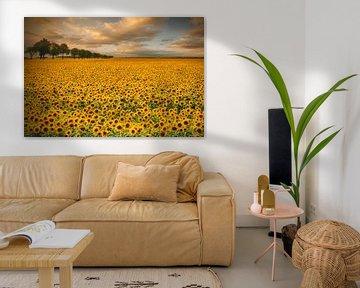 Sonnenblumen, Piotr Krol (Bax) von 1x