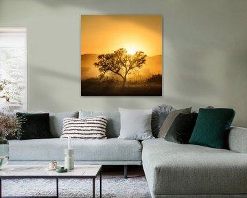 Golden Sunrise, Piet Flour van 1x