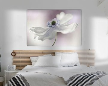 Anemone wind, Mandy Disher van 1x