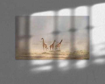 Surmonter la poussière Devils Amboseli, Jeffrey C. Sink sur 1x