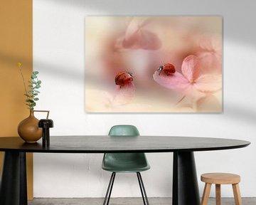 Lieveheersbeestjes op roze hortensia., Ellen van Deelen van 1x