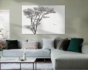 l'aigle africain, Piet Flour sur 1x