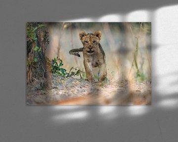 Cub - South Luangwa, Giuseppe DAmico von 1x