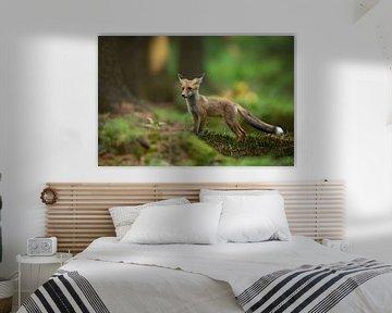 Red Fox, Milan Zygmunt von 1x