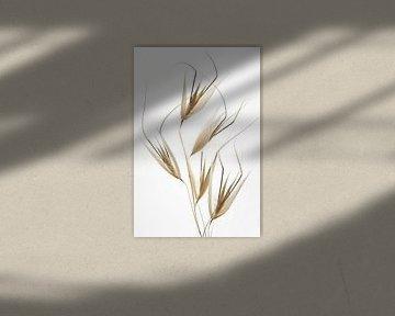 Délicatesse de la nature, Thierry Lagandré (transgressé sur 1x