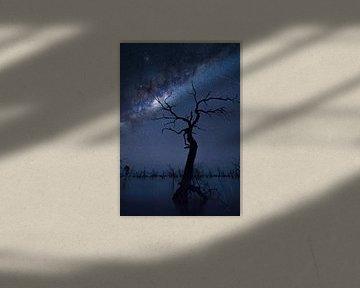 The Tree, Jingshu Zhu van 1x
