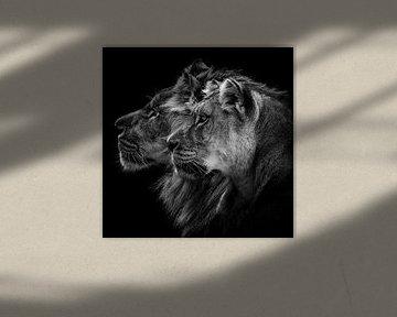 Löwe und Löwin Porträt, Laurent Lothare Dambreville von 1x