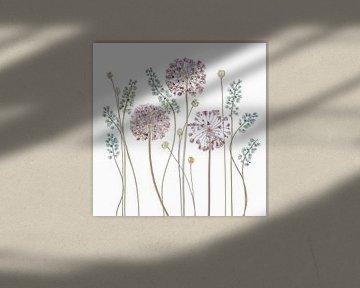 Allium, Mandy Disher von 1x